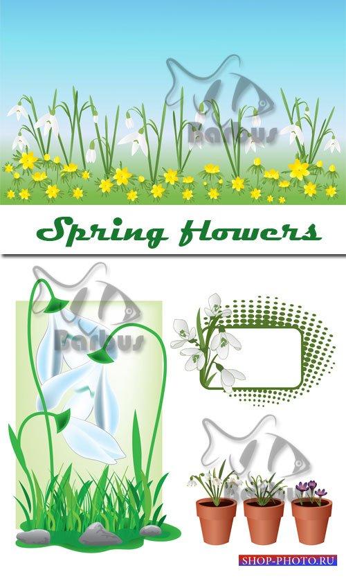 Spring flowers / Весенние цветы