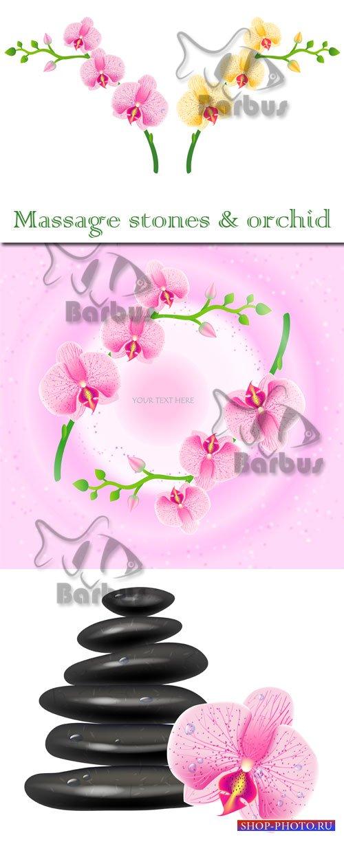 Massage stones and orchid / Орхидеи и массажные камни