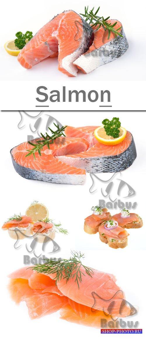 Salmon / Семга - photo stock
