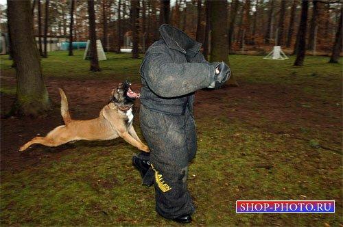 Шаблон для фотомонтажа - Кинолог и злобная собака