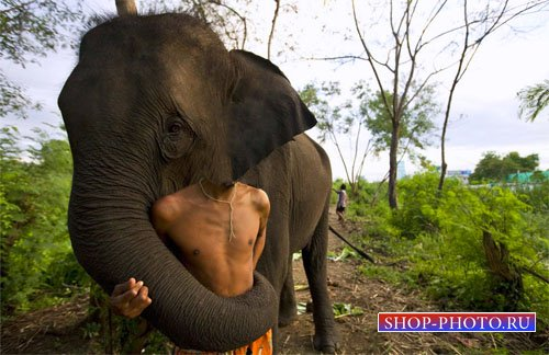 Шаблон для фотомонтажа - Вместе с радушным слоном