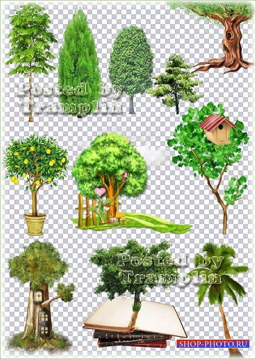 Деревья и кустарники на прозрачном фоне