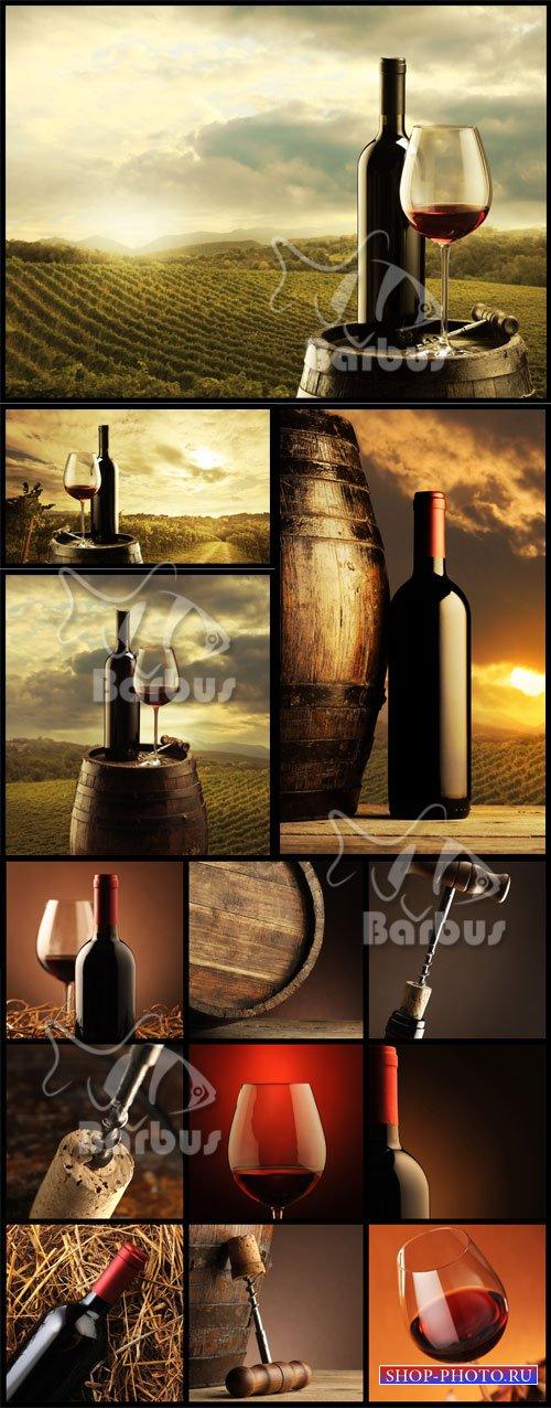 In vino veritas / Истина в вине - Вино, солнце, виноград