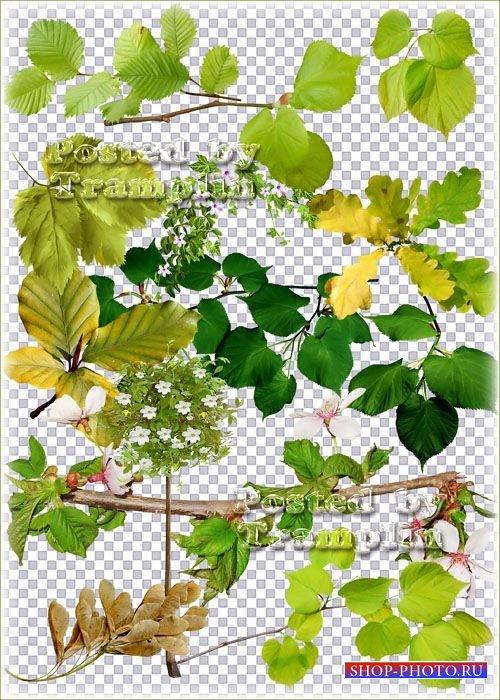 Клипарт в Png – Зелень, листья, дерево