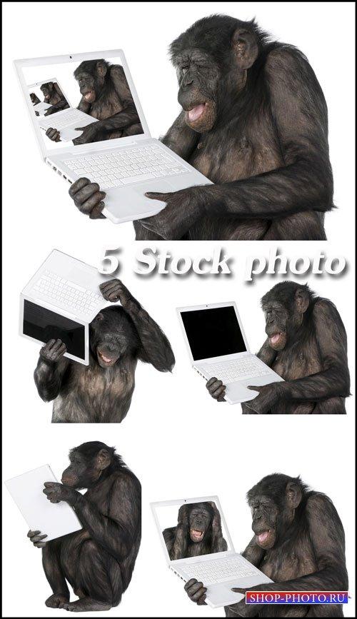 Обезьяна с ноутбуком - растровый клипарт