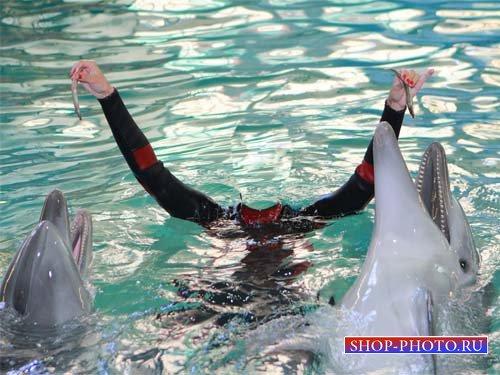 Шаблон для фотошоп - Милые дельфинчики