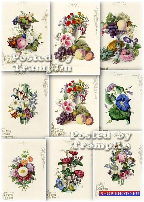 Старинные принты – Очаровательные иллюстрации фруктов и цветов