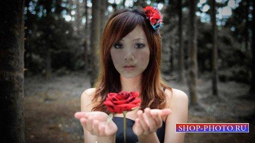 Шаблон для фотошопа - С роскошной розой
