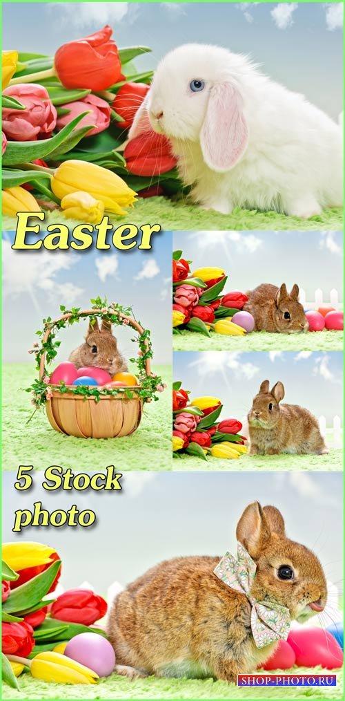 Кролики, пасхальная корзина с яйцами, тюльпаны - растровый клипарт