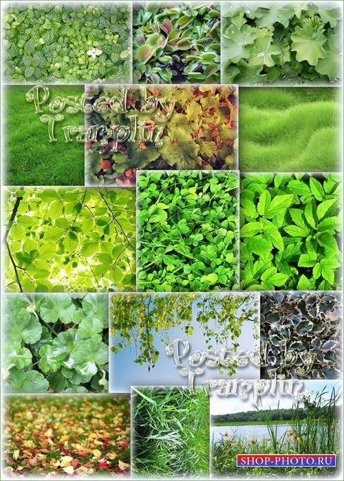 Фоны высокого разрешения – Зелень – Трава, листья, природа