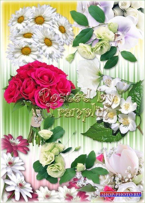 Цветы на прозрачном фоне – клипарт Png