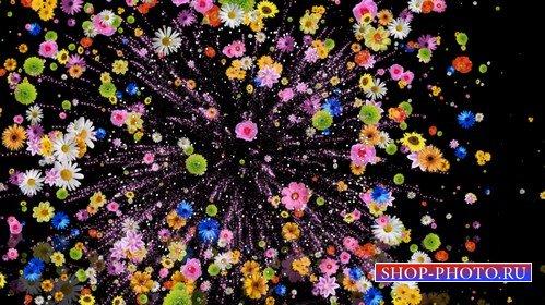 Футаж - Красочный салют из цветов
