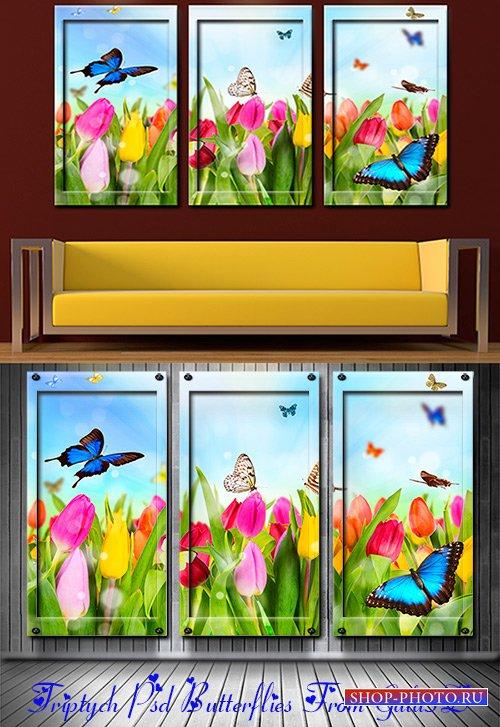 Красивые Триптих в psd формате Бабочки