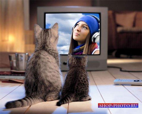 Рамка для фотошопа - Привлекательные два котика возле экрана