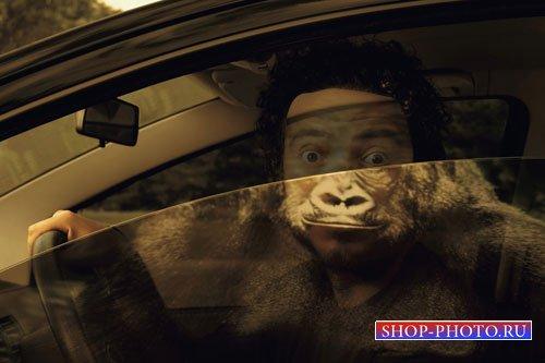 Шаблон для фото - Отражение орангутанга на стекле
