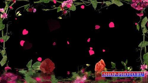 Футаж с альфой - Цветочное размытие