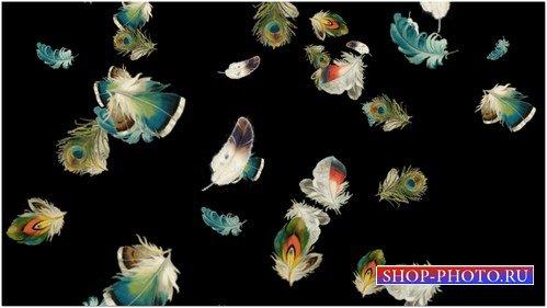 Футаж высокого качества с разноцветными летящими пёрышками