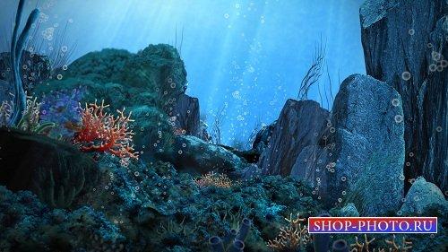 Футаж Подводный мир HD + SD