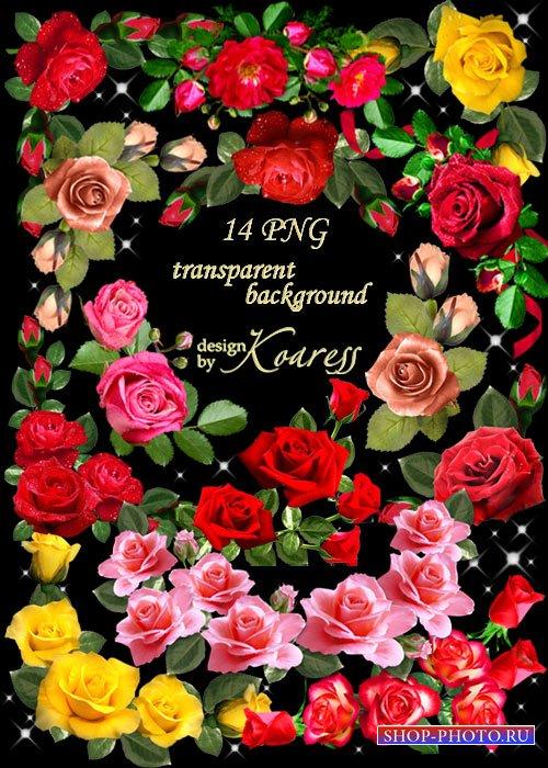 Цветочный PNG клипарт для фотошопа - Уголки из розовых, желтых, красных роз