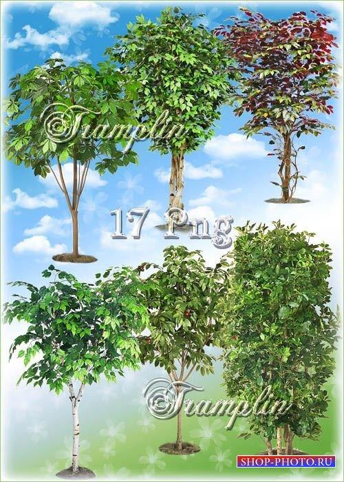 Клипарт на прозрачном фоне – Деревья - Под зеленой кроной