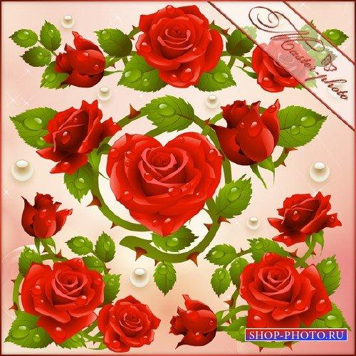 Исходник PSD для фотошопа - Яркие розы
