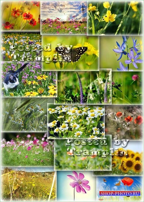 Фото клипарт – Луга, цветы, лето