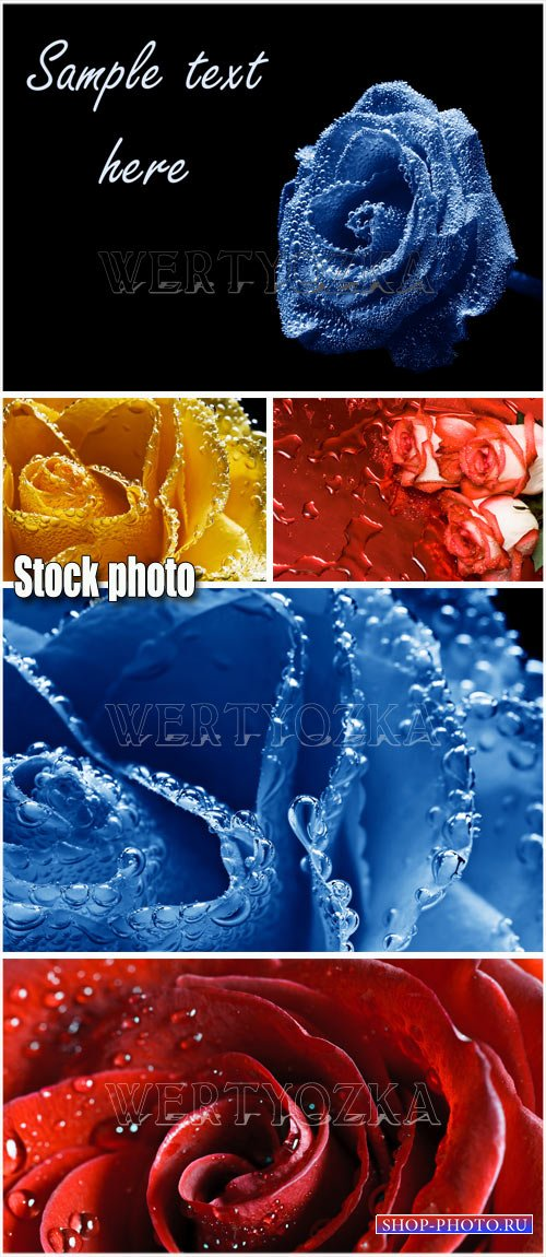 Фоны с розами / Rose with dewdrops - Raster clipart