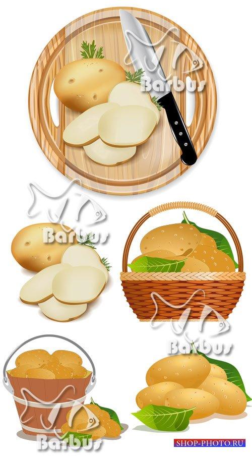 Young potato / Молодая картошка