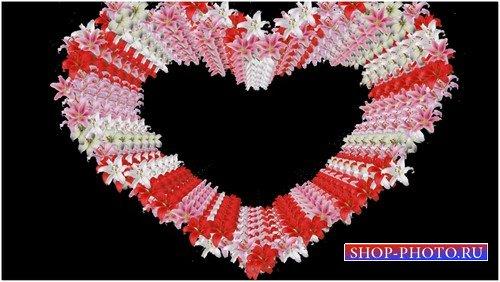 Футаж с альфаканалом - Сердце из лилий
