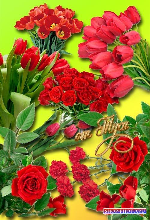 Клипарт - Нежные и красные цветы