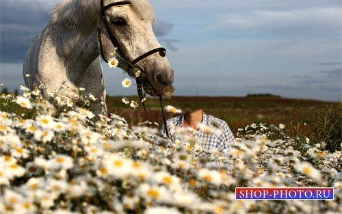 Шаблон женский - С красивым конем в поле ромашек