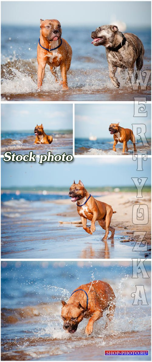 Прогулка с собакой по берегу моря / Walking the dog on the beach - raster c ...