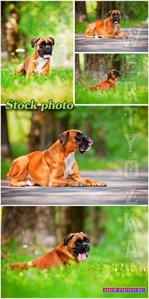 Породистая собака на природе  / Pedigreed dog on nature - Raster clipart