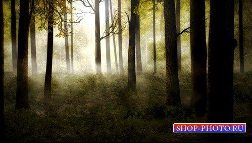 HD футаж Утренний лес