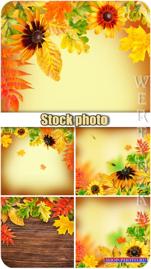 Осенние фоны / Autumn backgrounds, flowers and yellow autumn leaves - Raste ...