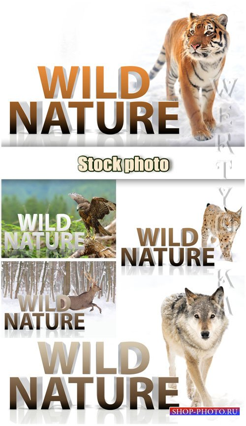 Дикая природа, тигр, волк, рысь, орел, олень / Wild nature, tiger, wolf, lynx, eagle, deer - Raster clipart