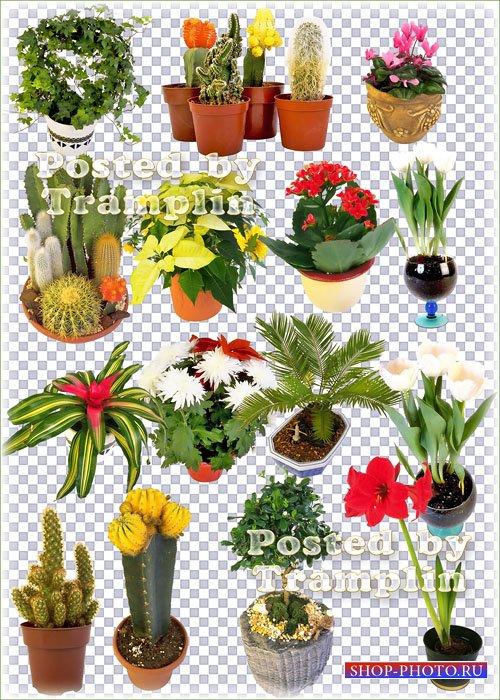 Букеты цветов, декоративные деревья и кактусы в горшках
