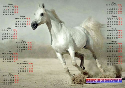 Красивый календарь - Белоснежный жеребец