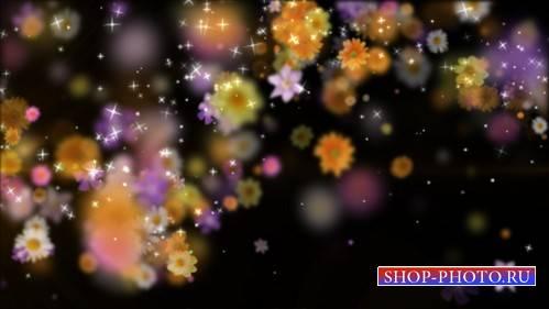 футаж Магия цветов