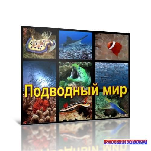 Сборник футажей Подводный мир AVI
