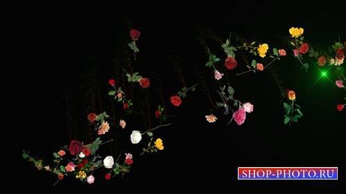 HD Розы россыпь