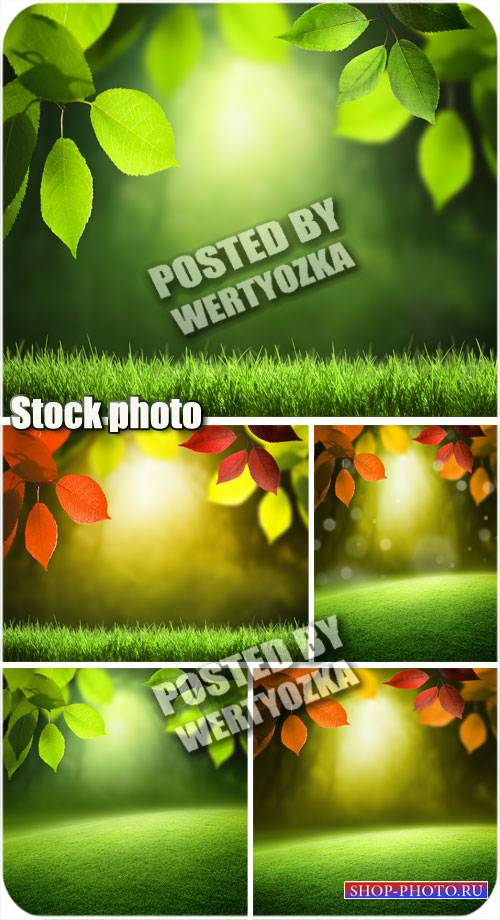 Фоны с листьями и травой / Backgrounds with leaves and grass - stock photos