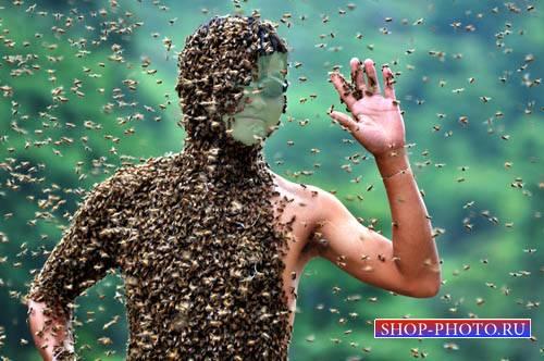 Шаблон для Photoshop - Весь в пчелах
