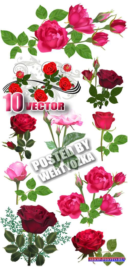 Красивые розы / Beautiful roses - stock vector