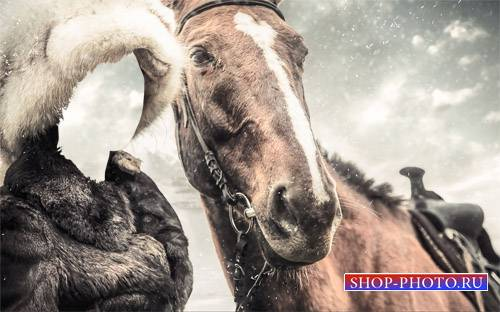 Шаблон psd женский - Девушка в мехах с лошадкой