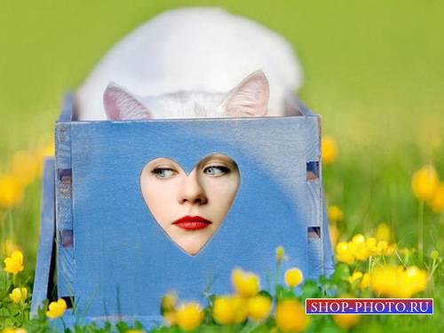 Рамка для фотомонтажа - Прикольная кошка