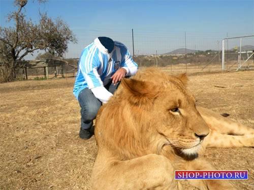 Шаблон psd мужской - Фотография с красивым львом