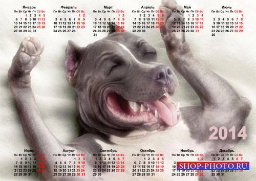 Красивый календарь - Жизнерадостная собачка