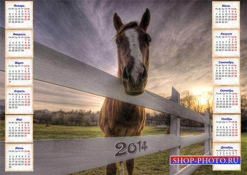 Настенный календарь - Лошадь в загоне