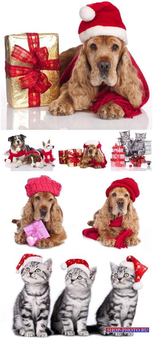 Кошки и собаки в шапках санты - сток фото